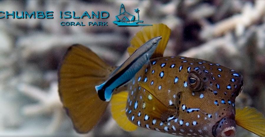Chumbe Island Coral Park Ltd, Zanzibar, Tanzania